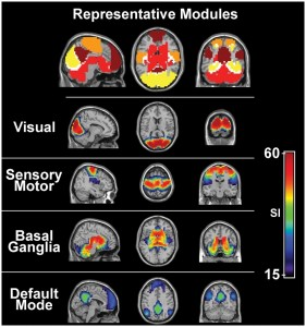 image_brain_activity